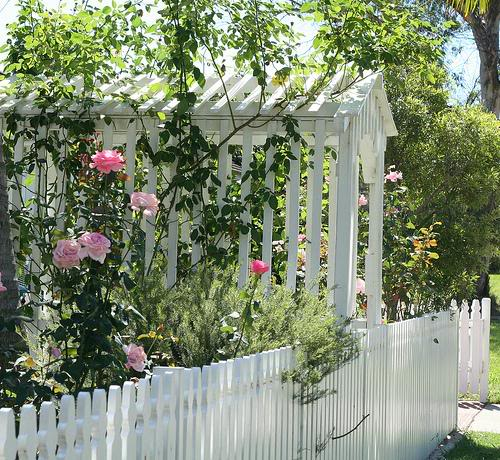 White Arbor Roses