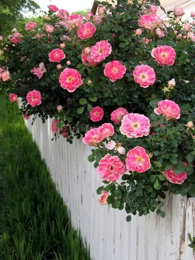 Wildflower Roses